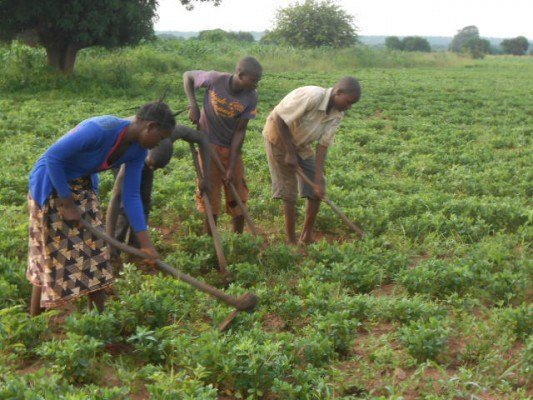 "Village Earth Affiliate ""Titukuke RCDA"" Helping Youth to Start Peanut Farms in Zambia"