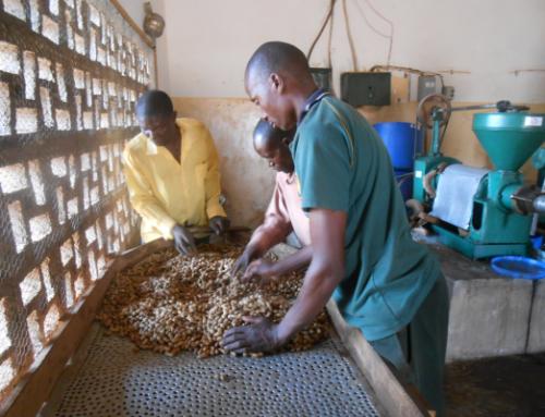 VE Affiliate Titukuke Rural Community Dev. Assoc. Empowers Youth Peanut Farmers