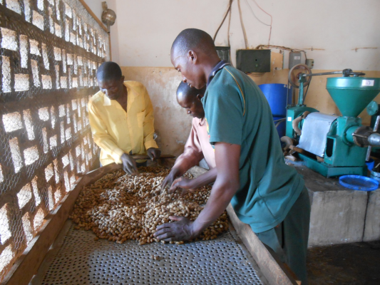 VE Affiliate Titukuke Rural Community Dev. Assoc. Empowers Youth Peanut Farmers
