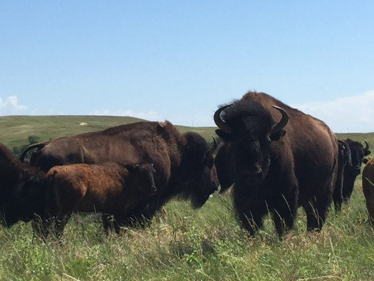 Summer 2015 Wrap-up Report from Village Earth Affiliate Knife Chief Buffalo Nation