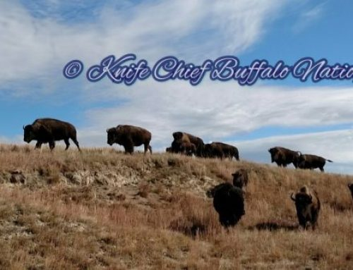 Annual Report from Mila Yatan Pika Pte Oyate Okolakiciye (Knife Chief Buffalo Nation Organization)