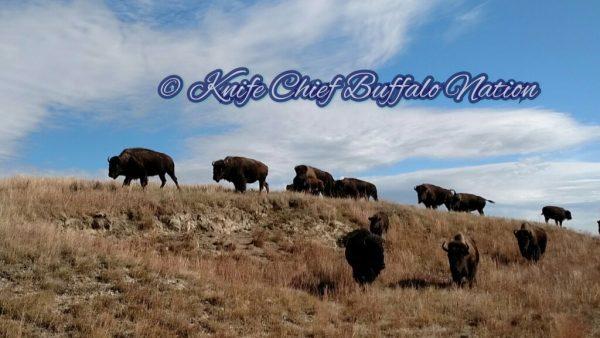 Annual Report from Mila Yatan Pika Pte Oyate Okolakiciye (Knife Chief Buffalo Nation Organization)