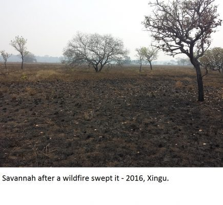 Maloca Working with Kamaiura of Brazil to Mitigate Impacts of Deforestation and Climate Change