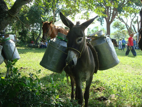 Working Equids (Donkeys, Mules and Horses) Driving Sustainable Livelihoods